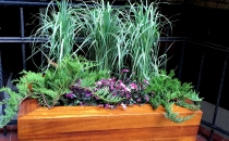 Rośliny we wnętrzach i na zewnątrz
